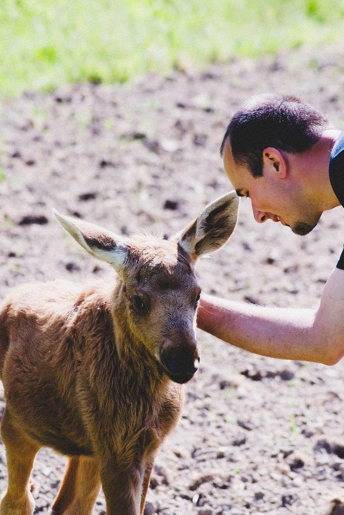 rescued-moose-visit-guy-erikas-plucas-1