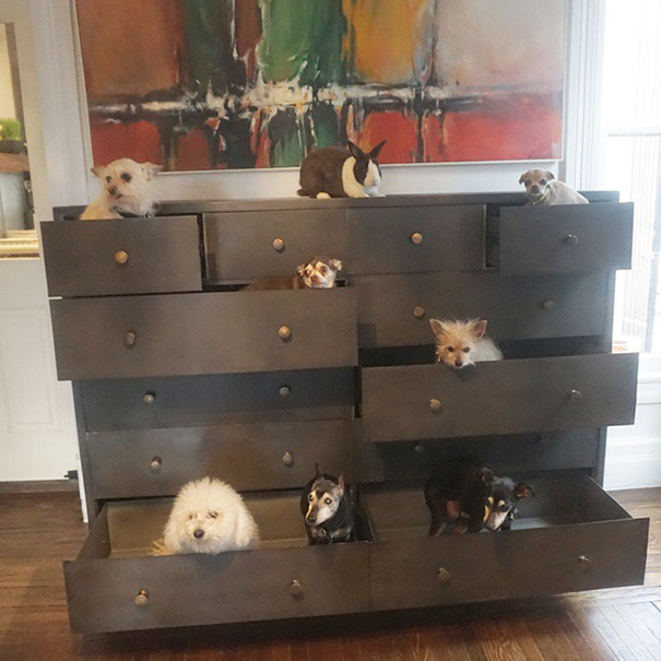 man-adopts-senior-dogs-shelter-steve-greig-39
