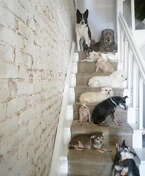 man-adopts-senior-dogs-shelter-steve-greig-521