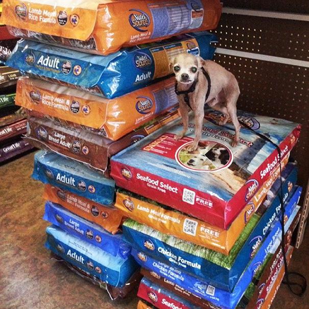 man-adopts-senior-dogs-shelter-steve-greig-6