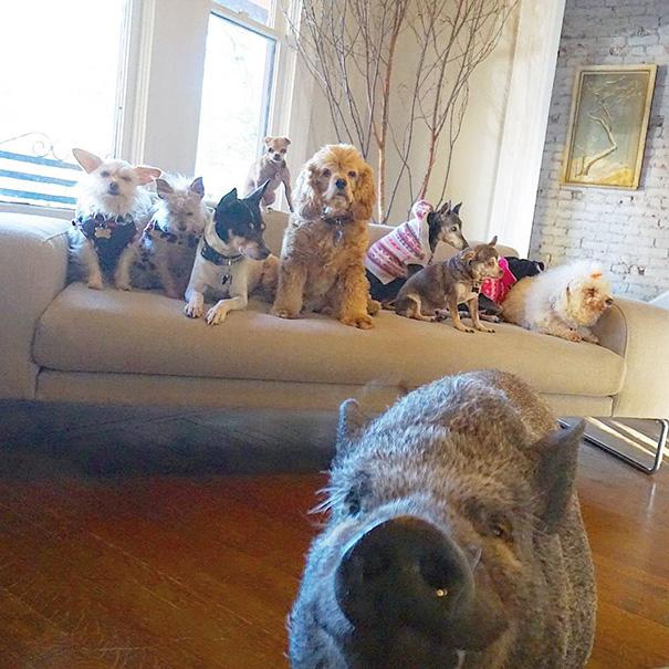 man-adopts-senior-dogs-shelter-steve-greig-98